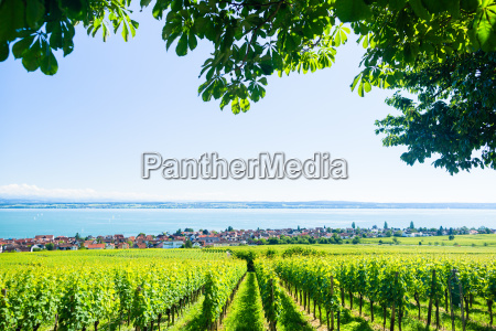 views of lake constance with alps