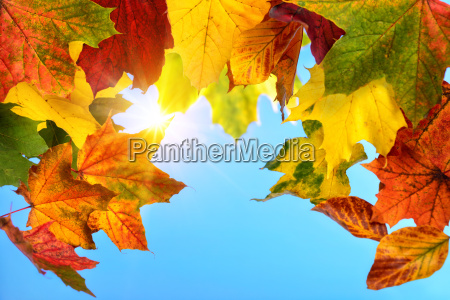 colourful autumn leaves and the sun