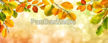 bordo delle foglie di autunno sullo