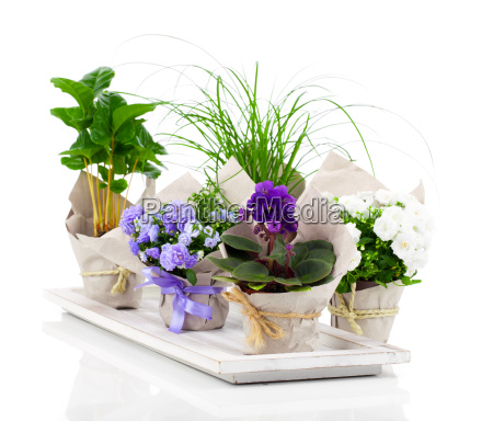 young plants in paper packaging