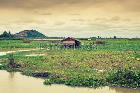 cambodian rice fields