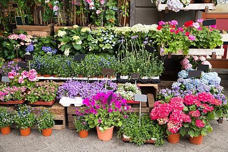 blumen und pflanzen ausserhalb des shops