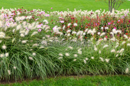 grasses in the park