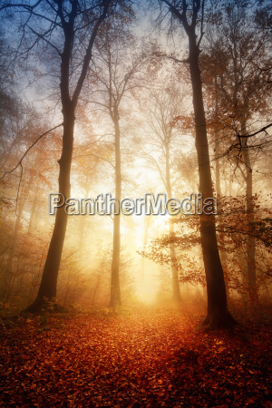 fascinating light fog in the forest