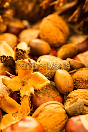 autumn chestnuts acorns leaves nuts