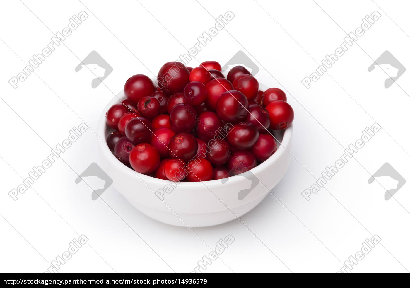 cowberry, (foxberry, lingonberry) - 14936579