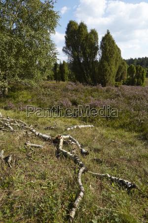 luneburg heath rotten brunches and