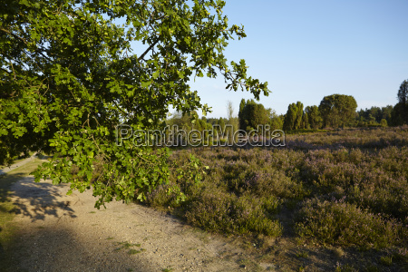luneburg heath brunch of an