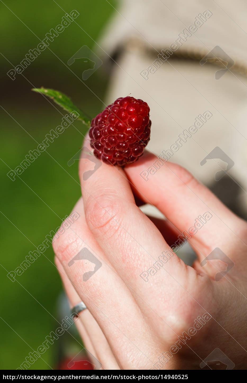 raspberry, picking - 14940525