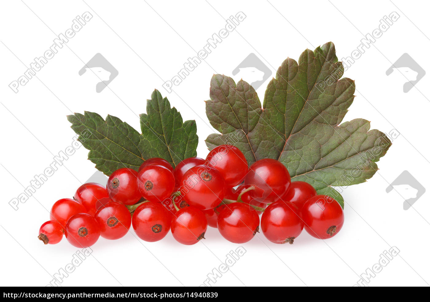 red, currant, bunch - 14940839