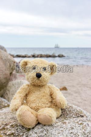 a, teddy, bear, sits, on, a - 14953459