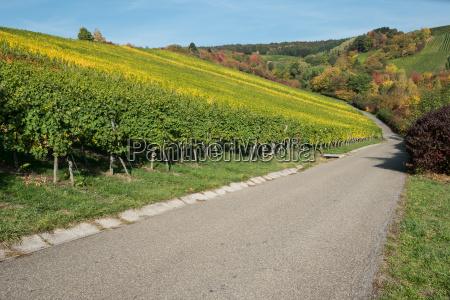 vineyard in autumn with blue sky