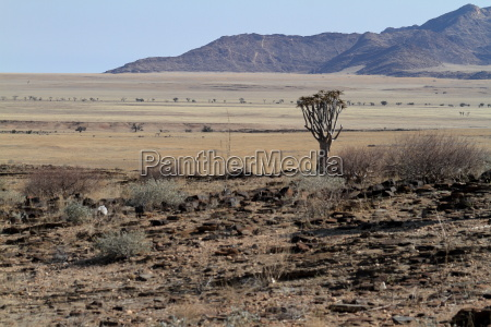 landscape in the namib naukluft national