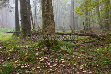 large broken tree lying in misty