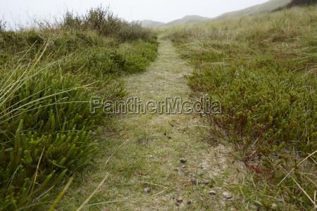amrum germany path through grass