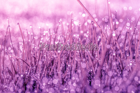 magical nature in violet color