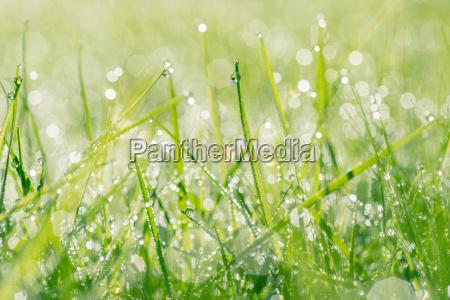 raindrops on fresh grass
