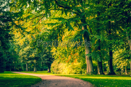 road in a park with colorful