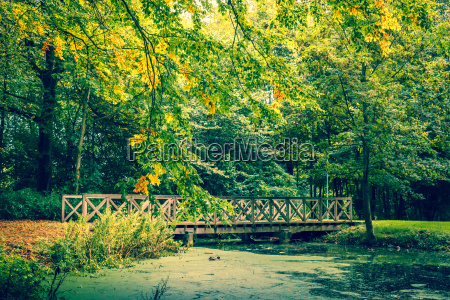bridge in a forest in autumn