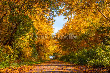 nature path in the autumn