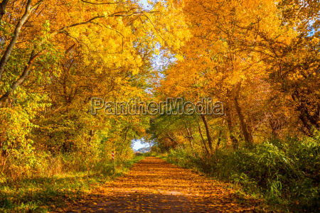autumn tree by a path