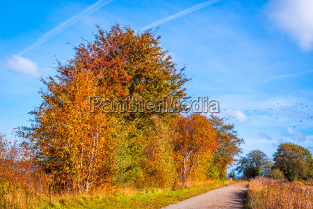 path going through a autumn landscape