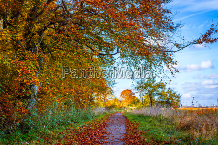 nature path in the fall