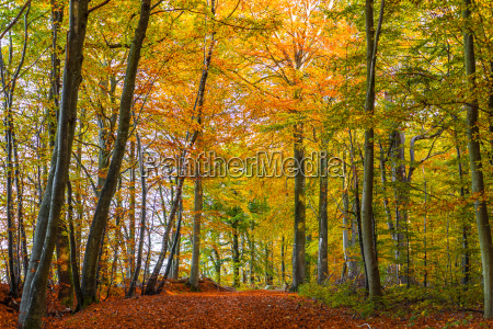 forest with colorful trees in the