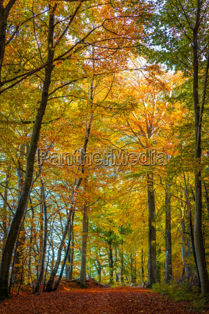 tall trees in a forest at