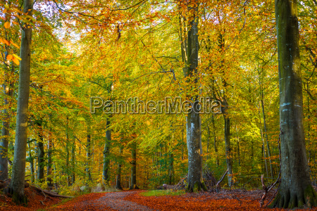 trees with warm colors in the
