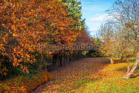 colorful trees in a garden in