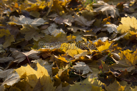 yellow fall foliage