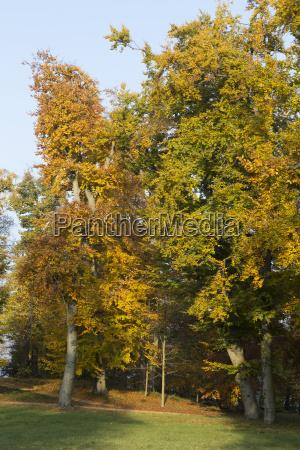 yellow brown grove
