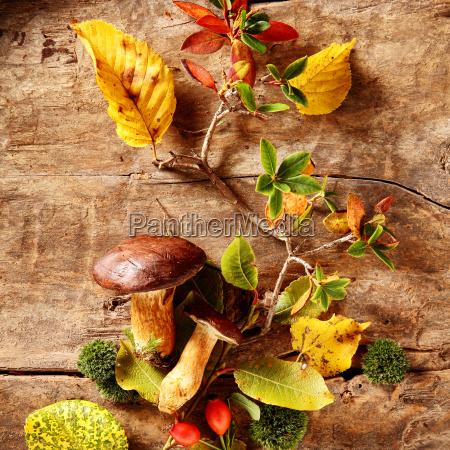 fresh boletus mushrooms from a fall