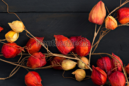 autumn decoration in front of wooden