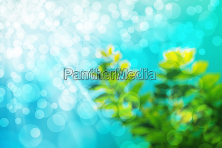 abstract natural blur background defocused leaves