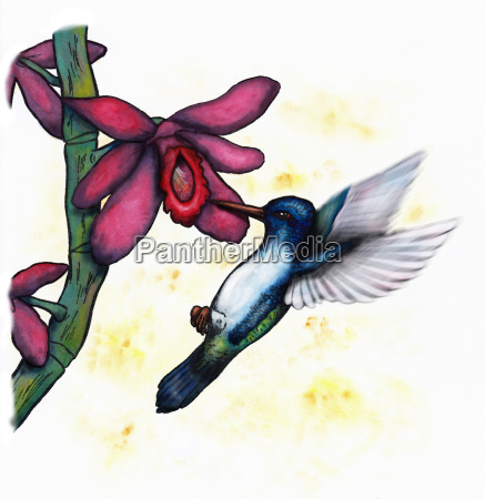 a blue green flying hummingbird and