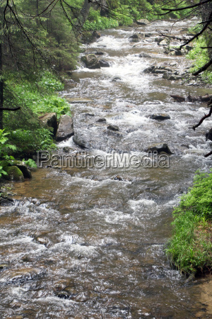 forest mountain river