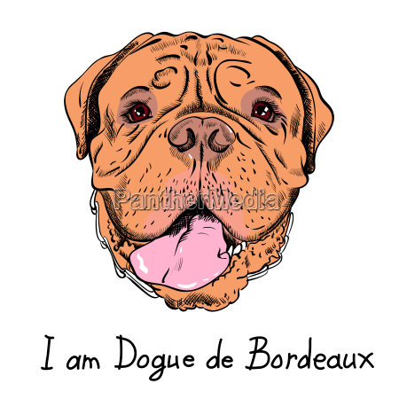 vector funny cartoon hipster dog french