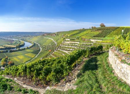 vineyards am neckar in sunny autumn