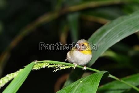 little bird finke