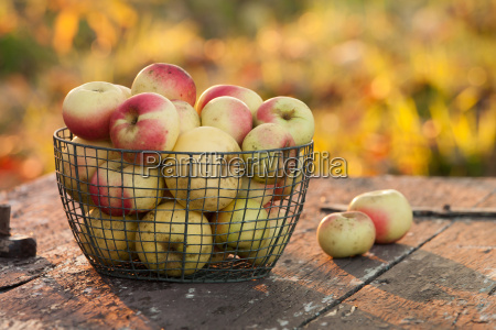 freshly harvested apples on a table