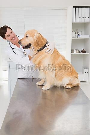 smiling veterinarian examining a cute dog