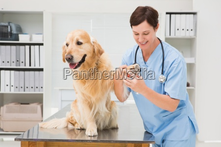 vet using nail clipper on a