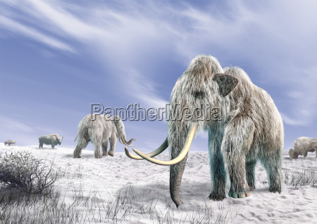 two mammoth in a field covered