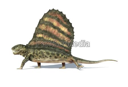dimetrodon dinosaur viewed from a side