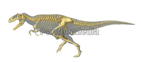 gigantosaurus dinosaurus full photo realistic skeleton