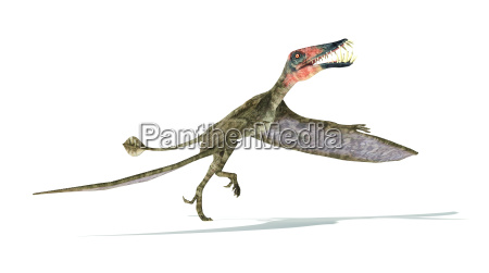 dorygnathus flying dinosaur photorealistic representation take