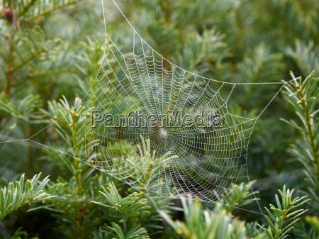 cob web with dew
