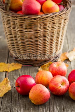 autumn apples on wooden table